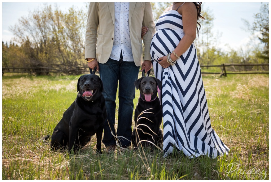 Maternity Photography With Dogs Calgary