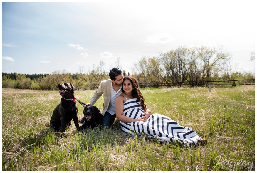 Maternity Photos With Puppy Calgary Alberta