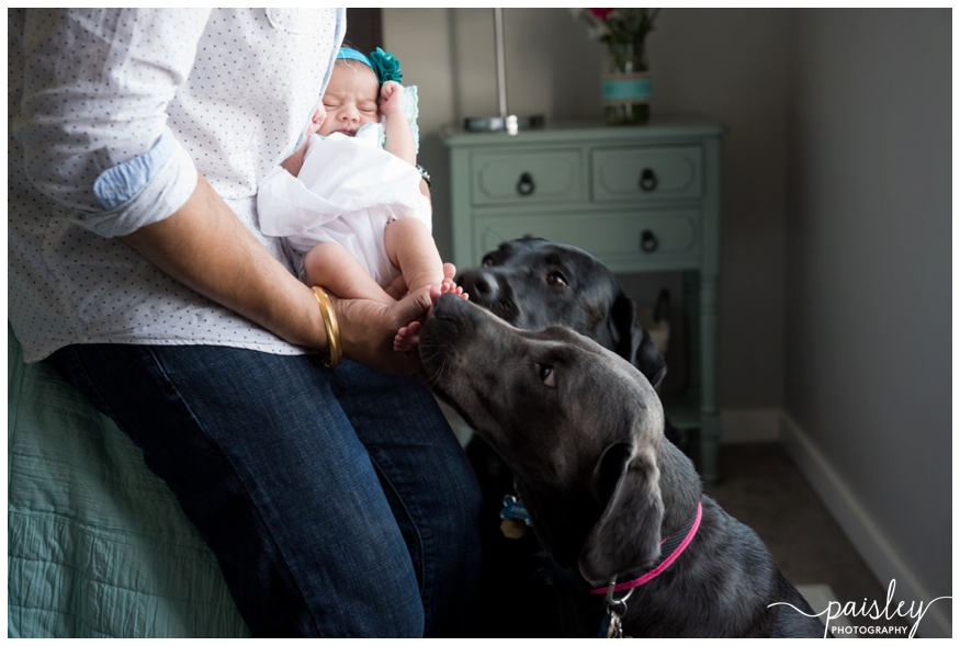Newborn Photography with Dogs