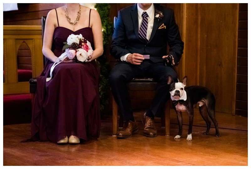 Dog Ring Barer Wedding Photography