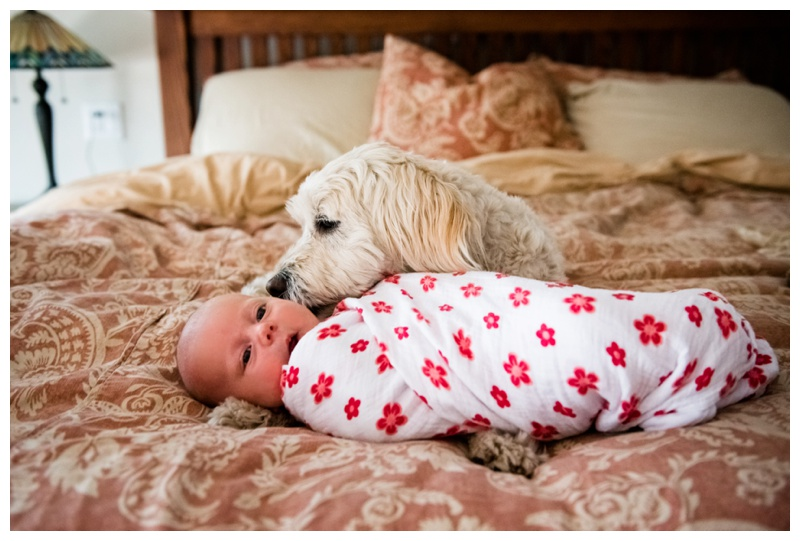 Baby & Dog Newborn Photography