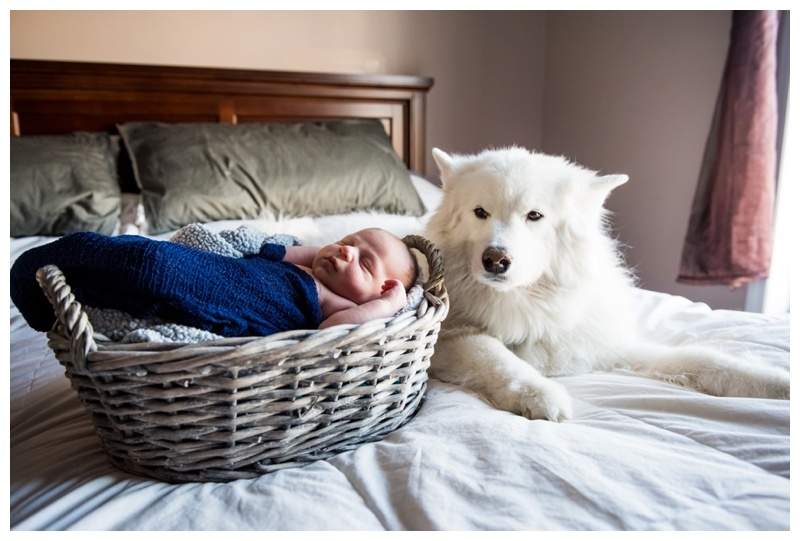 Dogs in Newborn Photos Calgary
