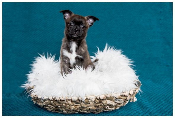 Newborn Puppy Photography – Calgary Pet Photographer