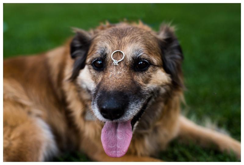 Dog Engagement Photos