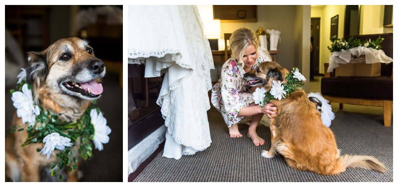 Canmore Wedding - Dogs In Wedding Photos