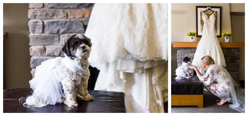 Canmore Wedding With Dogs