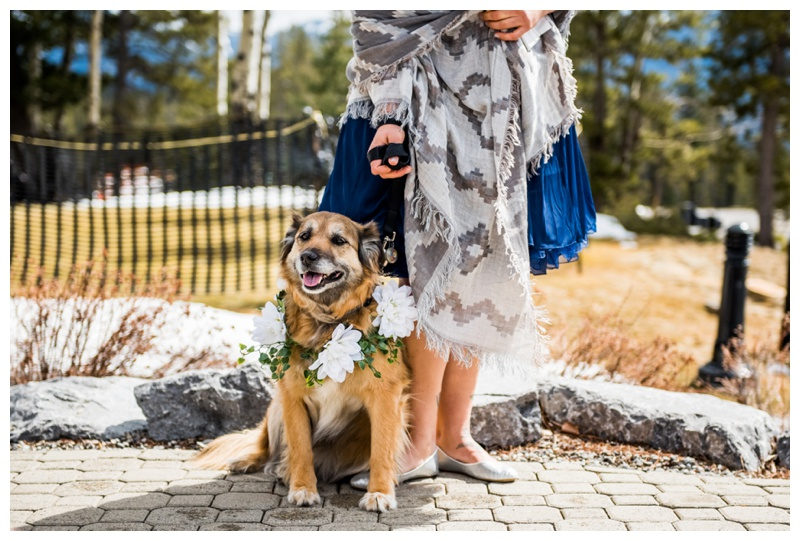 Dogs in Wedding Ceremonies - Canmore Wedding Photographer