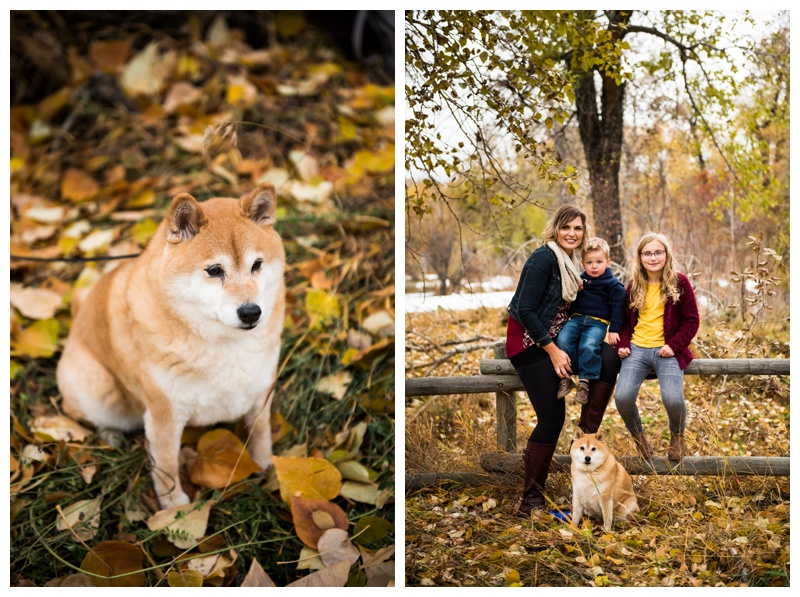 Dogs in Family Photos - Calgary Family Photographer
