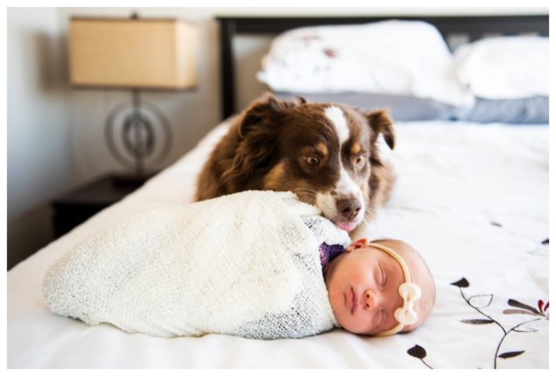 Lifestyle Newborn Photographers Calgary