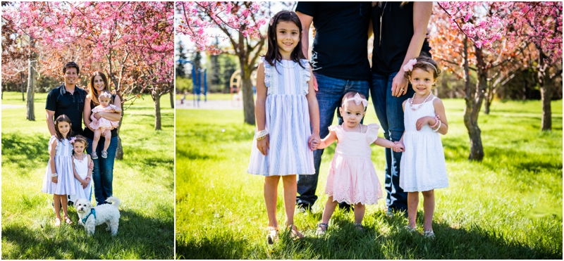 Cherry Blossom Family Photos Calgary
