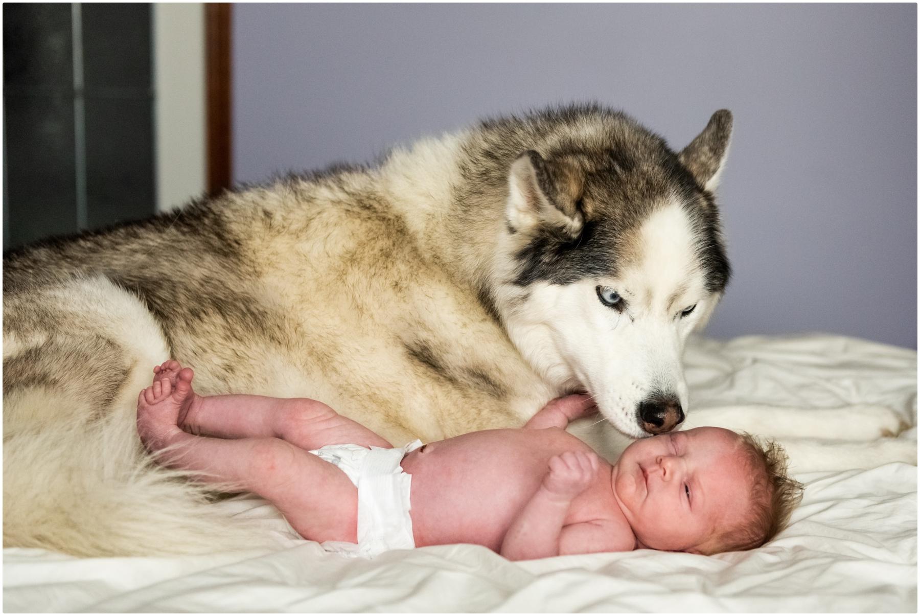 Calgary Newborn Photos- Calgary Family At Home Newborn Photos