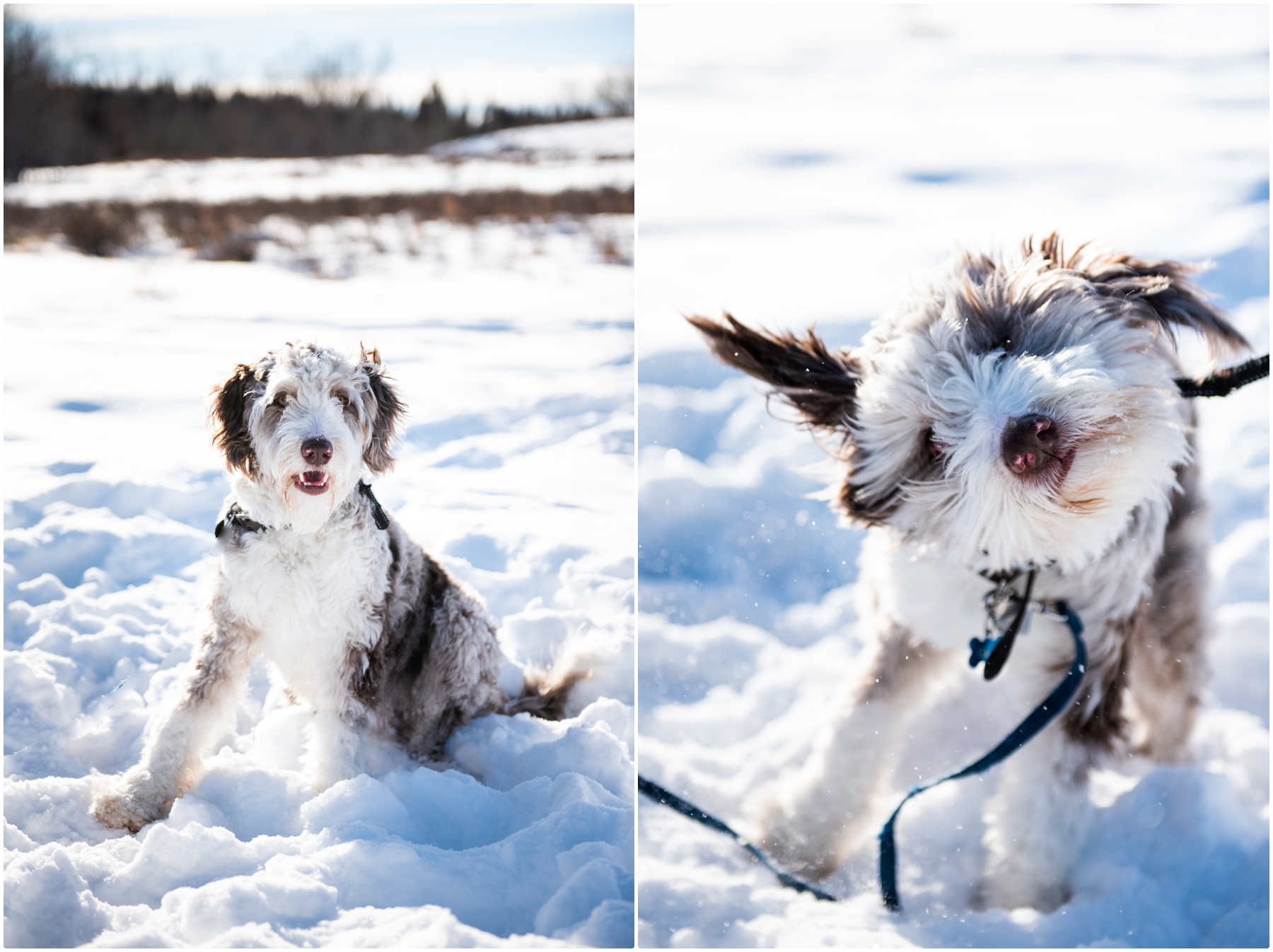 Calgary Dog Friendly Winter Maternity Photography
